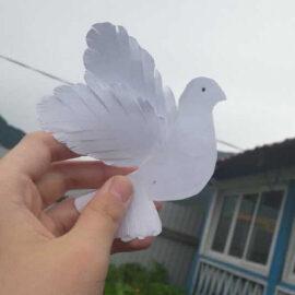 Учреждения культуры Бурятии запустили голубей
